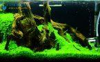 [SETUP] Hồ nano trân châu ngọc trai